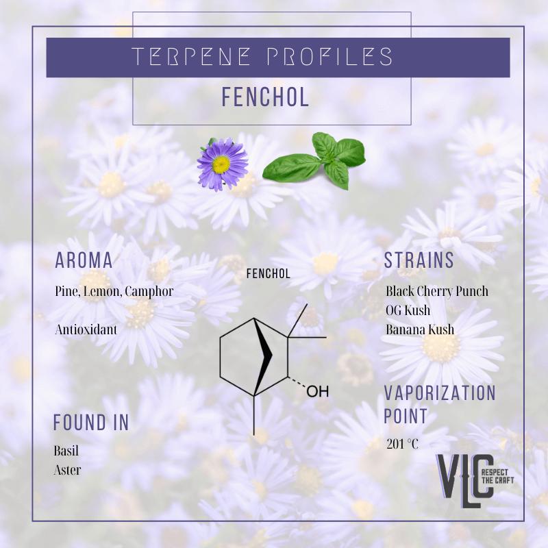 Fenchol - Vigr Life Cannabis