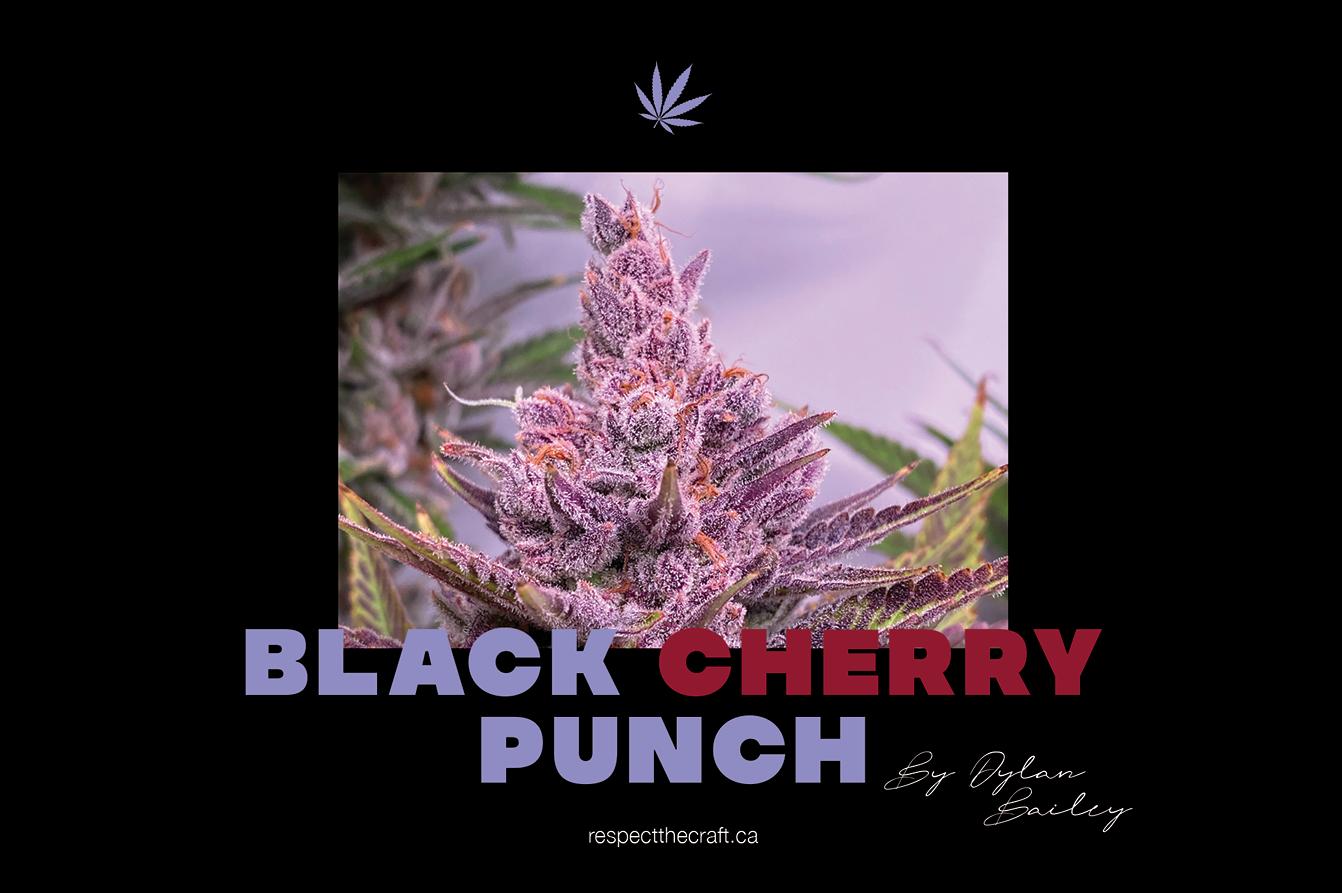 VLC Black Cherry Punch